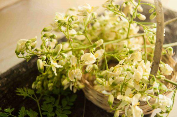 Moringa Flower Fritters